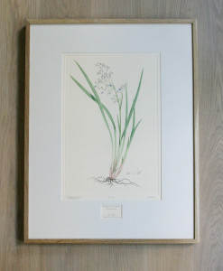 Copper plate engraving Framed to museum standards in a oak frame