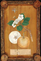 Japanese wood panel, Painted by Chikusai Kato